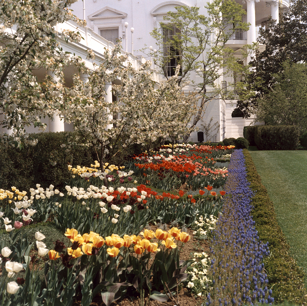 A Bunny in the Rose Garden – ARCHIVALLY SPEAKING: An Inside Look at ...